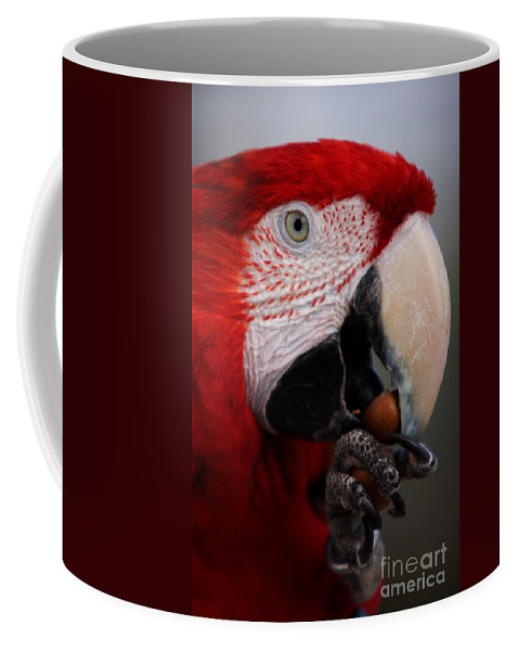 Macaw Coffee Mug featuring the photograph The Macaw by Angel Ciesniarska