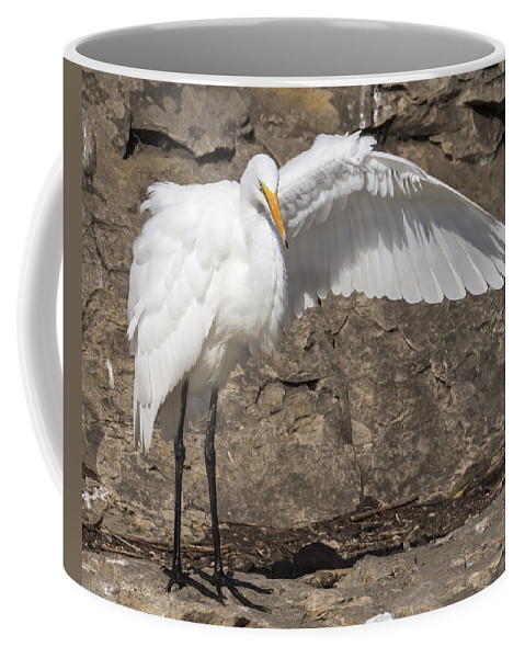 Birds Coffee Mug featuring the photograph The Magician by Bruce Frye
