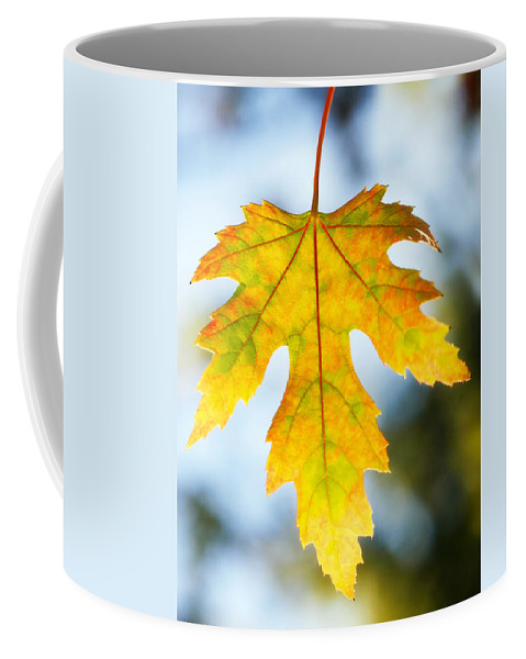 Maple Coffee Mug featuring the photograph The Maple Leaf by Marilyn Hunt