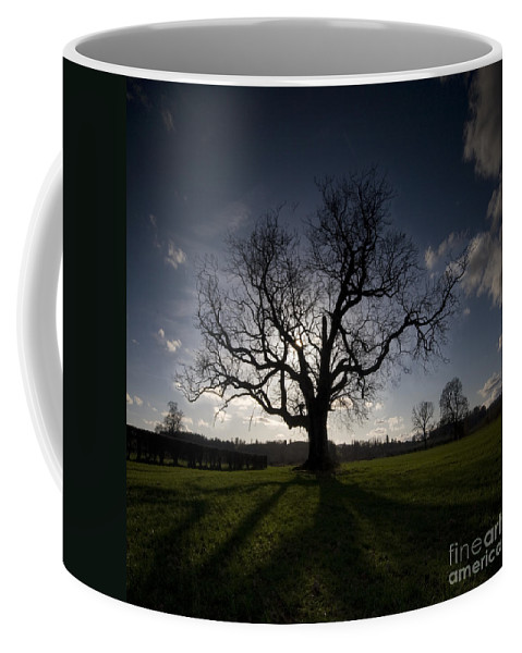 Oak Coffee Mug featuring the photograph The Mighty Tree by Angel Tarantella