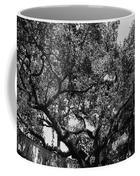 Black And White Coffee Mug featuring the photograph The Monastery Tree by Rob Hans