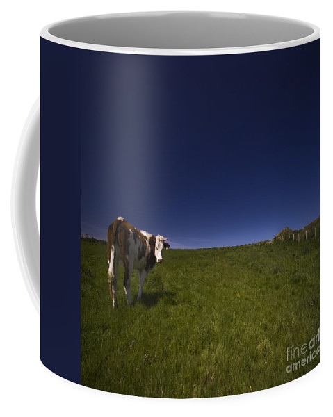 Cow Coffee Mug featuring the photograph The Moody Cow by Angel Tarantella