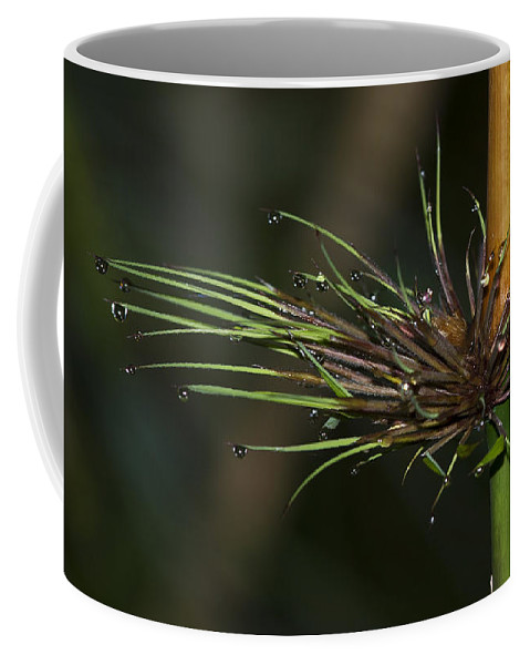 Festblues Coffee Mug featuring the photograph The Most Fabulous Spa.. by Nina Stavlund