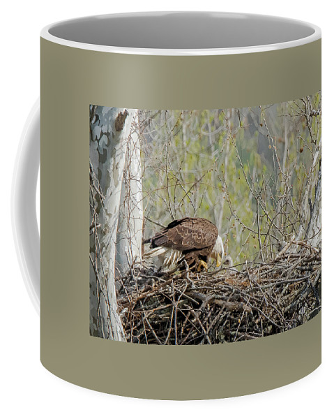 Eagle Coffee Mug featuring the photograph The Nest by J H Clery