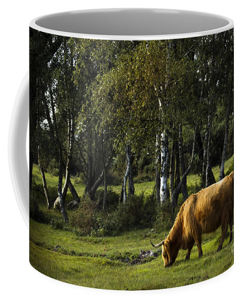 Heilan Coo Coffee Mug featuring the photograph the New forest creatures by Angel Ciesniarska