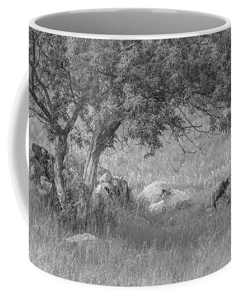 Old Homestead Coffee Mug featuring the photograph The Old Homestead 2016 by Thomas Young