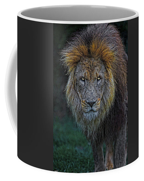 Lion Coffee Mug featuring the photograph The Old Lion by Chris Lord