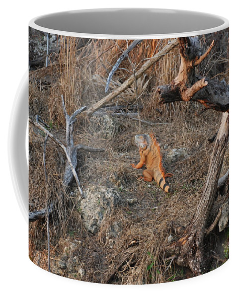Branches Coffee Mug featuring the photograph The Orange Iguana by Rob Hans