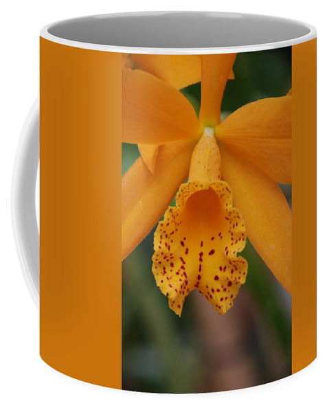 Yellow Coffee Mug featuring the photograph The Orange Orchid by Rob Hans