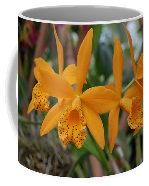 Macro Coffee Mug featuring the photograph The Orange Orchids by Rob Hans