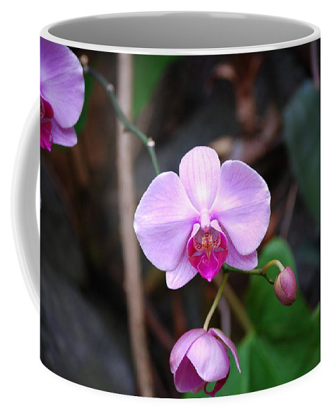 Orchid Coffee Mug featuring the photograph The Orchid by Eric Liller