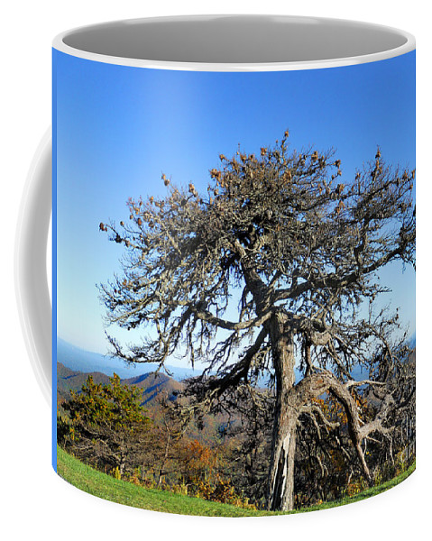 Scenic Tours Coffee Mug featuring the photograph The Original Knarled by Skip Willits