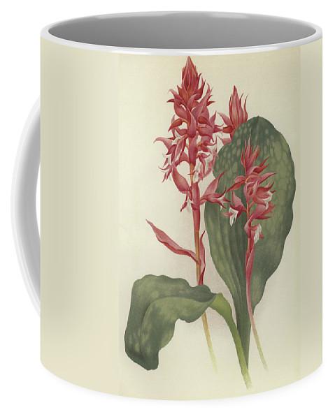 The Outstanding Stenorrhynchos Coffee Mug featuring the painting The Outstanding Stenorrhynchos by English School