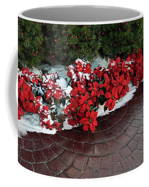 Poinsettia Coffee Mug featuring the photograph The Path To Christmas - Poinsettias, Trees, Snow, And Walkway by Mitch Spence