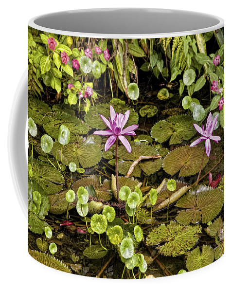 Flowers Coffee Mug featuring the photograph The Pond by Madeline Ellis