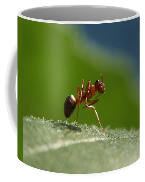 Ants Coffee Mug featuring the photograph The Pose by Ernie Echols