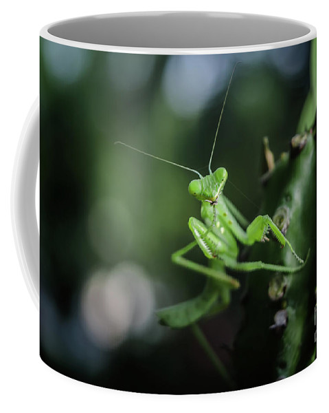 Michelle Meenawong Coffee Mug featuring the photograph The Praying Mantis by Michelle Meenawong