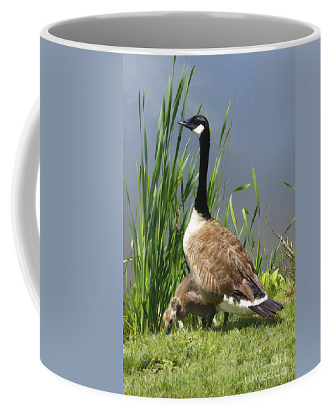 Goose Coffee Mug featuring the photograph The Protector by Deborah Benoit