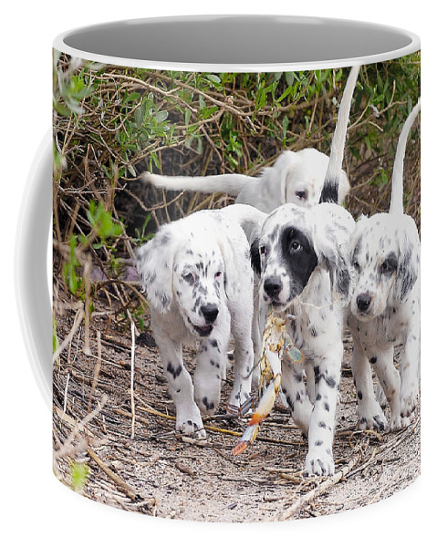 English Setter Coffee Mug featuring the photograph The Puppy's Prize by Scott Hansen
