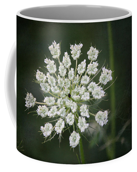 Queen Anne's Lace Coffee Mug featuring the photograph The Queens Lace by Teresa Mucha