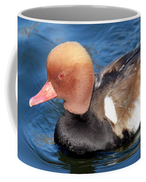Red Crested Pochard Coffee Mug featuring the photograph The Red Crested Pochard by Christopher Miles Carter