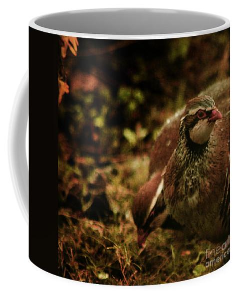 Partridge Coffee Mug featuring the photograph The Redlegged Partridges by Angel Tarantella
