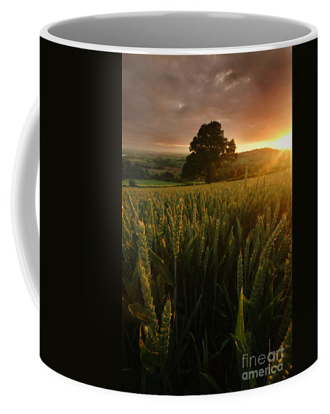 Rural Coffee Mug featuring the photograph The Rural Sunset by Angel Ciesniarska