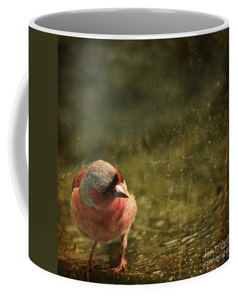 Chaffinch Coffee Mug featuring the photograph The Sad Chaffinch by Angel Ciesniarska