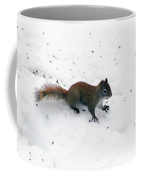 Squirrel Coffee Mug featuring the photograph The Search Is Over by Marcy Stanley