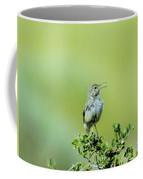 Birds Idaho Birds. Small Birds Coffee Mug featuring the photograph The Singing Birdie by Jeff Swan