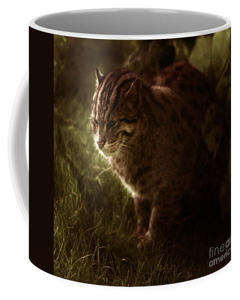 Sleepy Coffee Mug featuring the photograph The Sleepy Wild Cat by Angel Ciesniarska