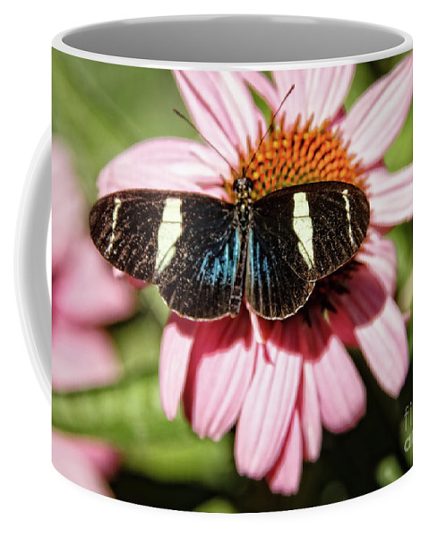 Butterfly Coffee Mug featuring the photograph The Small Blue Grecian by Robert Bales