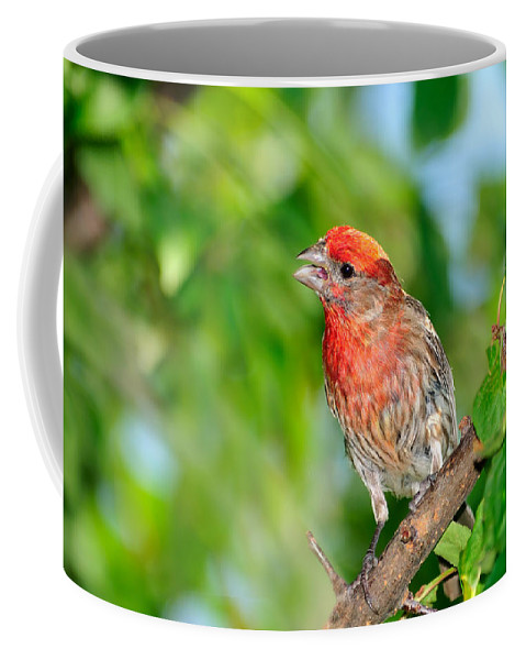 Finch Coffee Mug featuring the photograph The Song by Betty LaRue