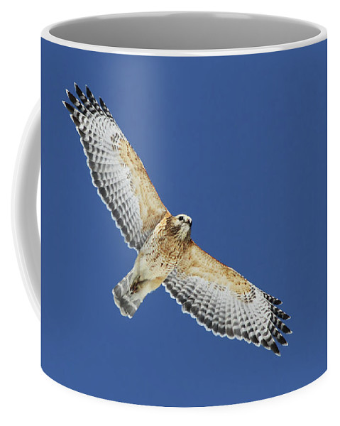 Animal Coffee Mug featuring the photograph The Spirit Of The Hawk by Mircea Costina Photography