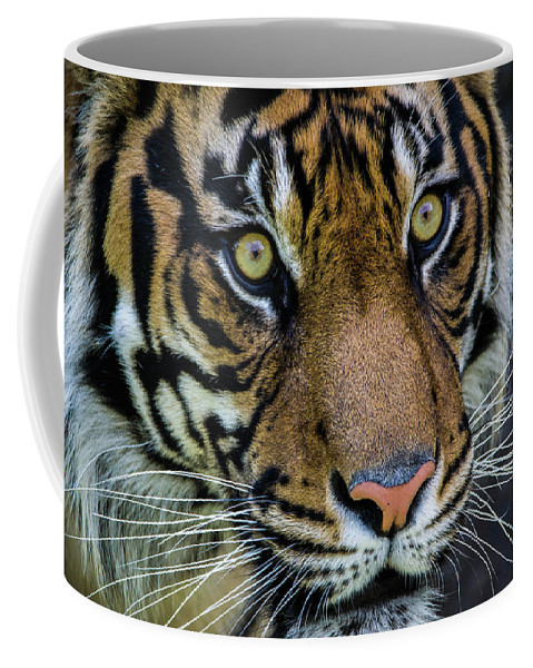 Tiger Coffee Mug featuring the photograph The Stare by James Farrell