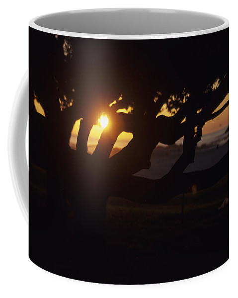 Camps Bay Coffee Mug featuring the photograph The Sun Peeks Through The Branches by Stacy Gold