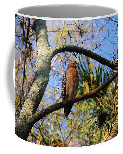 Buzzard Coffee Mug featuring the photograph The Supervisor by Susanne Van Hulst