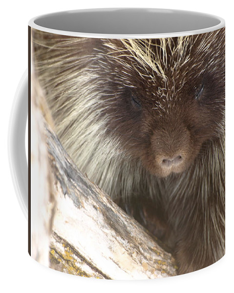 Porcupine Coffee Mug featuring the photograph The Tender Side Of Porcupine by DeeLon Merritt