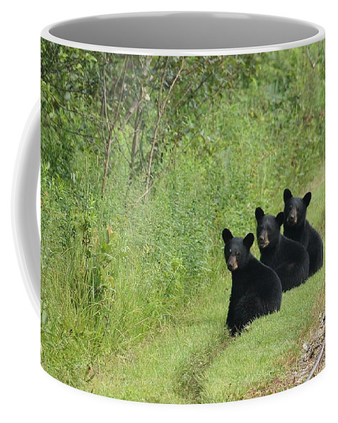 Black Bears Coffee Mug featuring the photograph The Three Little Abc Bears by Teresa McGill