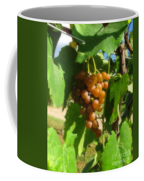 Grapes Coffee Mug featuring the photograph The Vineyard by September Stone