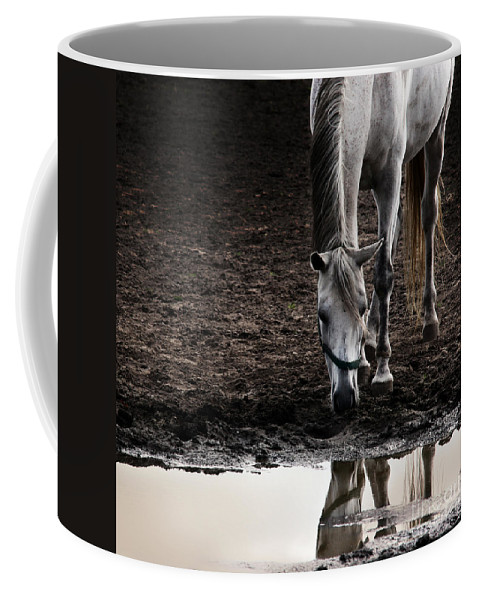 Horse Coffee Mug featuring the photograph The Water Reflection by Angel Tarantella