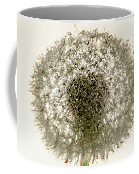 Dandelion Coffee Mug featuring the photograph The Wet One by Wolfgang Stocker