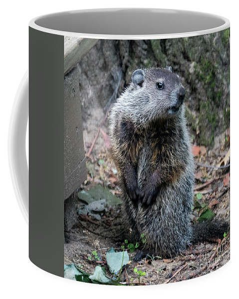 Groundhog Coffee Mug featuring the photograph The Woodchuck Has To Pee by Kenneth Lempert