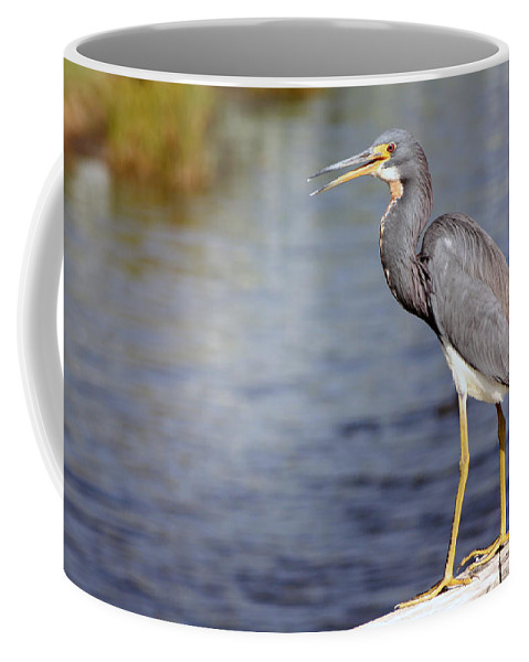 Ibis Coffee Mug featuring the photograph The World Is Mine by Tamivision