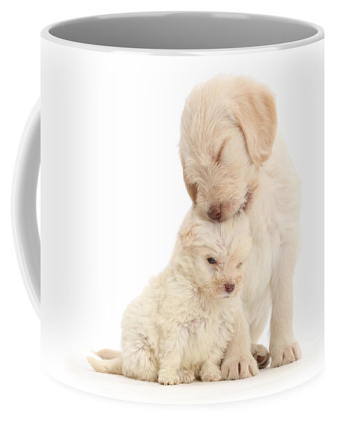 Golden Labradoodle Coffee Mug featuring the photograph They Call It Puppy Love by Warren Photographic