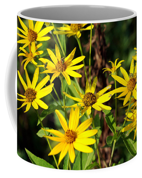 Beautiful Coffee Mug featuring the photograph Thin-leaved Sunflower by Jack R Perry