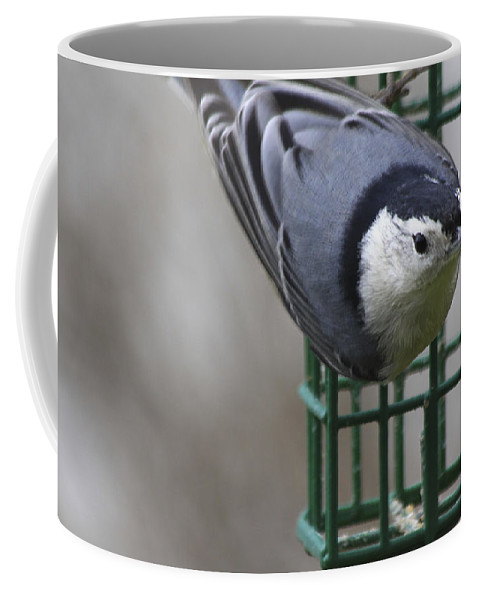 Bird Coffee Mug featuring the photograph This Is My Suet by Deborah Benoit