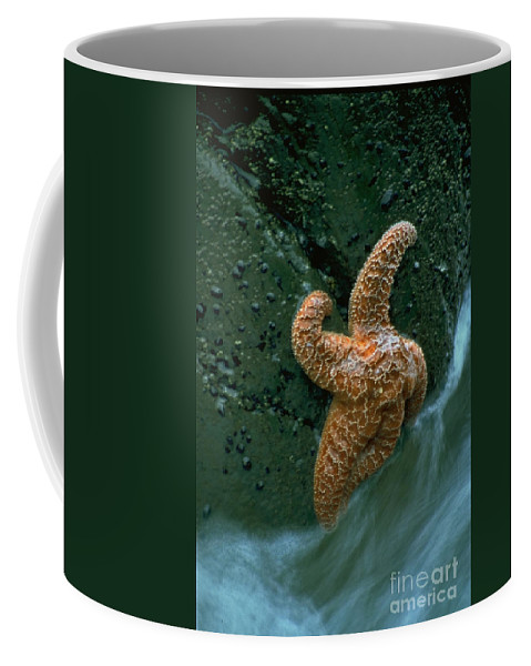 Star Fish Coffee Mug featuring the photograph This Starfish Has A Good Grip by Sven Brogren
