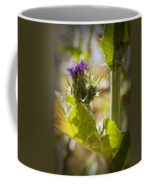 Thistle Coffee Mug featuring the photograph Thistle 2 by Kelley King
