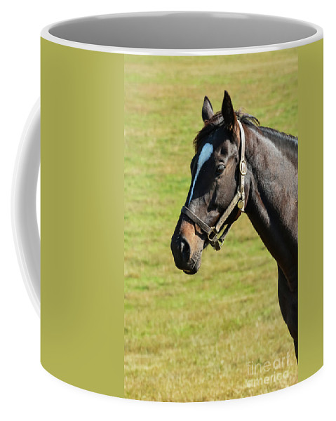 Lexington Coffee Mug featuring the photograph Thoroughbred Portrait Three by Bob Phillips